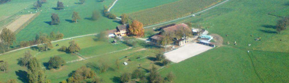 Steinweid